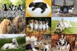 Hunde.ppsx auf www.funpot.net