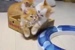 Niedliche-Katzen-Babys.mp4 auf www.funpot.net