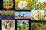 Sommer-20.ppsx auf www.funpot.net