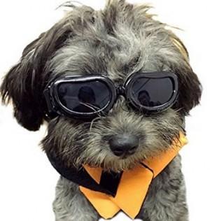 Sonnenbrille für den Hund!